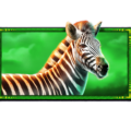 Safari King slot symbol